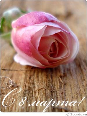 Комнатное дерево с розывыми цветами