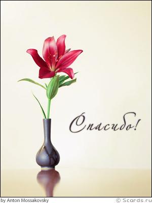 Красивый яркий цветок - видимый знак проявления благодарности...